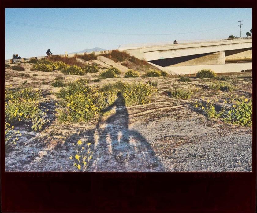 bike shadow in flowers